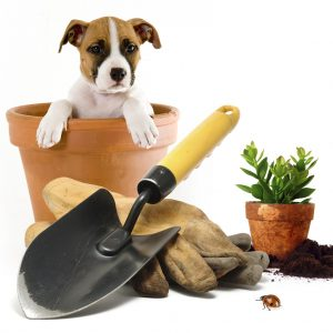 Palveluni pihaan ja puutarhaan